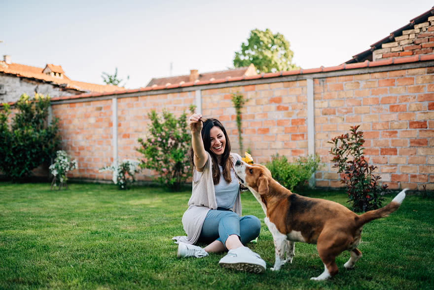 3 Ways to Build a Side Hustle From Pet Ownership